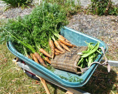 sassafras-tasmania-carrots-beans-1