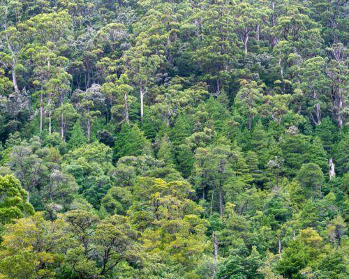 sassafras-tasmania-location-75