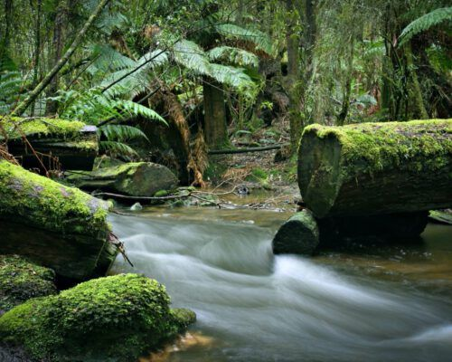 sassafras-tasmania-location-85