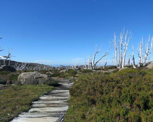 sassafras-tasmania-location-87