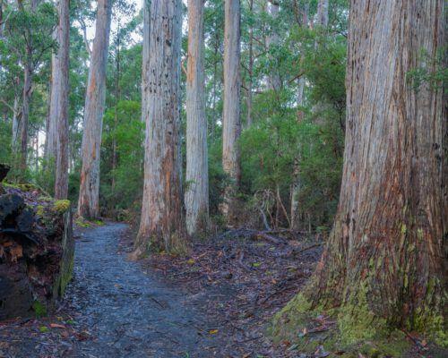 sassafras-tasmania-location-88